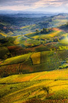 ***Vista da La Morra [View from La Morra] (Piedmont, Italy) by Andrea Mucelli