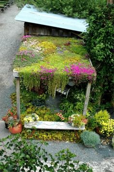 Gorgeous living roof