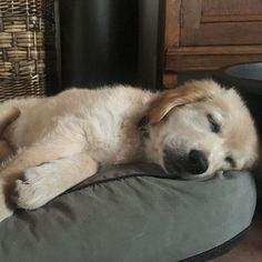 Snoozing until the weekend comes...