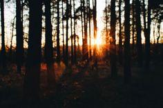 Forest. Sun.   https://jestemolaczesc.wordpress.com