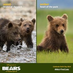 Which bear will you relate to most when you #MeetTheCubs on next week?