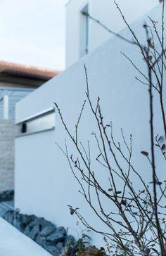 白い壁に映えるブルーベリー