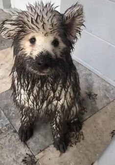 Cute Funny Dogs, Cute Funny Animals, Adorable Dogs, Cute Pets, Funny Pets, Cute Animal Videos, Cute Animal Pictures, Cute Dogs And Puppies, Doggies