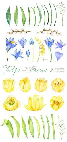 Tulips & Crocus Spring Flowers Separate Clipart. Handpainted watercolor, diy floral elements, wedding, invitations, greetings, frames,