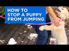 Andre Millan gets tips from a trainer of the Dog Psychology Center on how to stop a puppy from jumping.