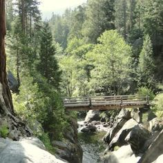 sequoia_east_fork