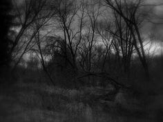 All sizes | ....besides these creepy, swampy woods... | Flickr - Photo Sharing!