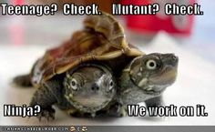 funny and cute turtles | Cats, Dogs and other Turtles – Cute or Funny?