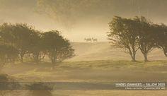 Vogel- en Natuurfotografie door Remco van Daalen - Home