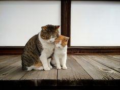 猫 / Cat                                                                                                                                                                                 もっと見る