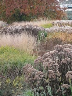 Subtle shades and fluffy bits Piet Oudolf - Trentham Gardens