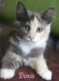 I was surrendered by my previous owner as a small kitten because her older kitty didn't like me. I get along great with dogs cats and kids, and I am looking for my forever home!