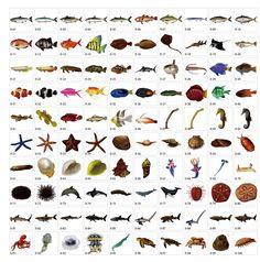 リアルな海の生き物イラスト素材|Freebie AC Mail Magazine