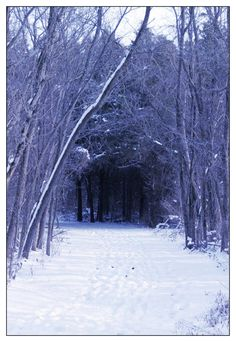 Caesar Creek State Nature Preserve, winter
