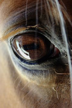 "Horse eyes - ""A large and liquid eye.the swirl of dust around pounding hooves.these, then, are the images that move us. All The Pretty Horses, Beautiful Horses, Animals Beautiful, Animal Original, Animals And Pets, Cute Animals, Horse Anatomy, Majestic Horse, Tier Fotos"