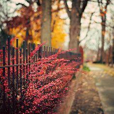 花 旅行风景 植物 青春是打开了就合不上的书,人生是踏上了…