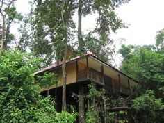 TREE TOPS JUNGLE SAFARIS Tree House Living 3D2N Be amazed by the stunning scenery: virgin rainforest, magnificent limestone mountains and beautiful waterfalls.Be fascinated by the jungle noises: gibbons whooping, cicadas sin...