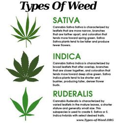 a guide to identifying a plant  (marijuana cannabis)