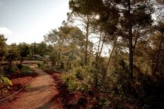 Hotel with a History: A Landscape of Sun and Stone at La Granja Ibiza