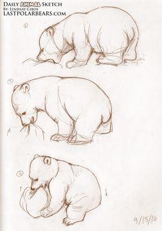sketching bear cubs | Daily Animal Sketch – Polar Bear Cub – Knut (3)