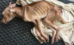Justice For Riley! Starved By His Owner And Dumped on The Street To Perish In Critical Condition!   PetitionHub.org