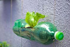 Hortas suspensas com garrafas pet   Fotos