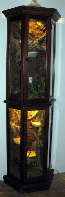 curio vivarium complete by OTLM, via Flickr