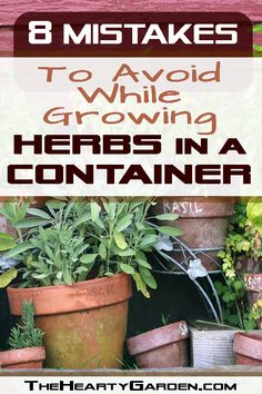 Growing herbs in a container do quite well, but they have different requirements than maintaining an in-ground garden. Read how to avoid 8 common mistakes. #herbs #containergardening #theheartygarden Indoor Gardening, Container Gardening, Gardening Tips, Herb Garden, Vegetable Garden, Growing Herbs At Home, Grow Food, Love The Earth, Companion Planting