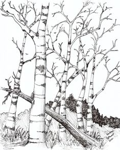birch trees by theemberravendeviantartcom on deviantart narcissus flowerflower coloring pagestree