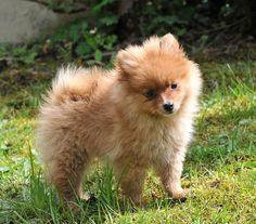 Ce que votre race de chien préférée dit de votre personnalité : vous pourriez être surpris !