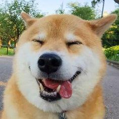 Perfis de cachorros no instagram