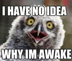 Funny Animal Memes, Funny Jokes, Funny Animals, Sleep Meme, Funny Sleep, Can't Sleep Humor, Cant Sleep Quotes Funny, Insomnia Meme, Insomnia Quotes