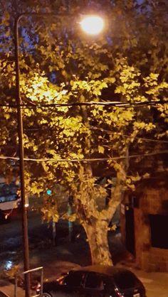 PAISAJE COTIDIANO; Hoy llegue muy temprano a mi trabajo. Garuaba. De pronto el viento enloqueció y las hojas amarilleadas, que viene pintando el otoño, comenzaron a sacudirse estremecidas. Detrás de la ventana, mudo testigo, traté de retener apenas un instante.