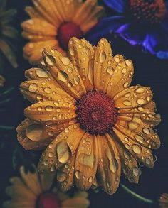 Magical Sun Flowers🌻 Gives hope 🌻⠀⠀⠀⠀⠀⠀⠀⠀⠀ .⠀⠀⠀⠀… Magical Sun Flowers🌻 Gives hope 🌻⠀⠀⠀⠀⠀⠀⠀⠀⠀ .⠀⠀⠀⠀⠀⠀⠀⠀⠀ Do you have That Beautiful Gypsy Soul ?⠀⠀⠀⠀⠀⠀⠀⠀⠀ Do you love natural Inspired Life… Sunflower Pictures, Sunflower Art, Sunflower Clipart, Yellow Sunflower, Tumblr Wallpaper, Nature Wallpaper, Dark Wallpaper, Aesthetic Iphone Wallpaper, Aesthetic Wallpapers