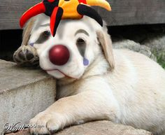 Sad Clown...