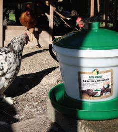 Waters up to 100 chickens Easy to re-fill and clean Great for indoor or outdoor use Heated Chicken Waterer, Automatic Chicken Waterer, Easy Fill, Poultry, Indoor, Interior, Backyard Chickens