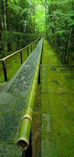 Entrance to Koto-in garden, moss, bamboo, Kyoto, Japan by Andrew Storey