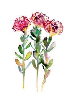 Australian native flora art prints by Natalie Martin, featuring her vibrant watercolour artworks. Limited edition, archival quality prints on beautiful textured paper. Protea Art, Botanical Art, Botanical Illustration, Illustration Art, Watercolor Artwork, Watercolor Flowers, Watercolor Projects, Art Floral, Plant Drawing