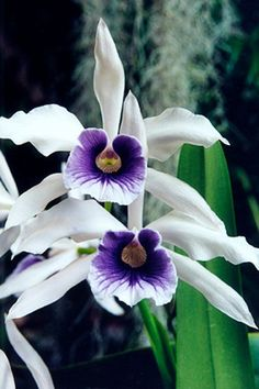 Fine Art Photo Greeting Card Flower Photography - White Purple Orchids Card…