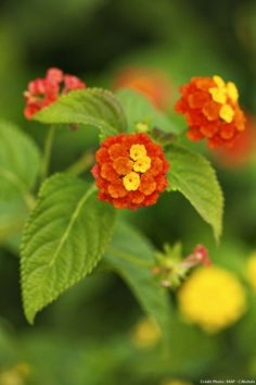- 10 easy plants that resist the lack of water - Relaxation Garden Orange Flowers, Tropical Flowers, Small Wedding Bouquets, Friendship Flowers, Gardening Magazines, Garden In The Woods, Garden Care, Permaculture, Backyard Landscaping