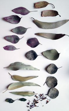 Visual of eucalyptus leaves, that dye red Colour Schemes, Color Patterns, Theme Nature, Eucalyptus Leaves, Color Inspiration, Wabi Sabi, Planting Flowers, Crafts, Beautiful
