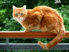 cat on the edge | Flickr - Photo Sharing!