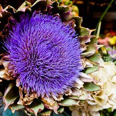 One time, when I was walking through a market in #Italy, I came across a really strange looking #flower. It looked like something out of this world. I then found out it was an #artichoke's flower.