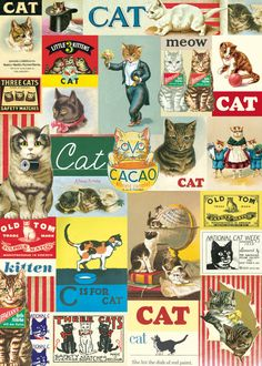 Cavallini Vintage Cat Wrapping Paper by Cavallini Papers & Co.  I have this print!  It is more like wallpaper.
