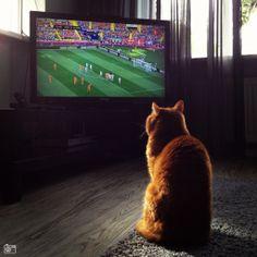 crazy football loving cat :o)