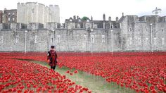 poppy flower london - Google Search