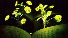 Bioluminescent Plants Could Enlighten Urban Farms