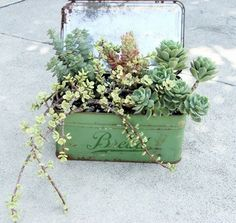 vintage bread box succulent garden