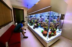 Aquarium Cool Fish Tanks, Saltwater Fish Tanks, Saltwater Aquarium, Aquarium Fish Tank, Planted Aquarium, Home Aquarium, Aquarium Design, Aquarium Ideas, Coral Reef Aquarium