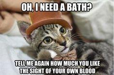 Condescending Wonka Cat    See more funny pics at killthehydra.com!